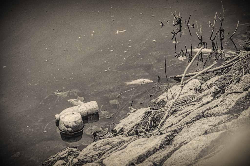 tote Fische und Müll am Seeufer