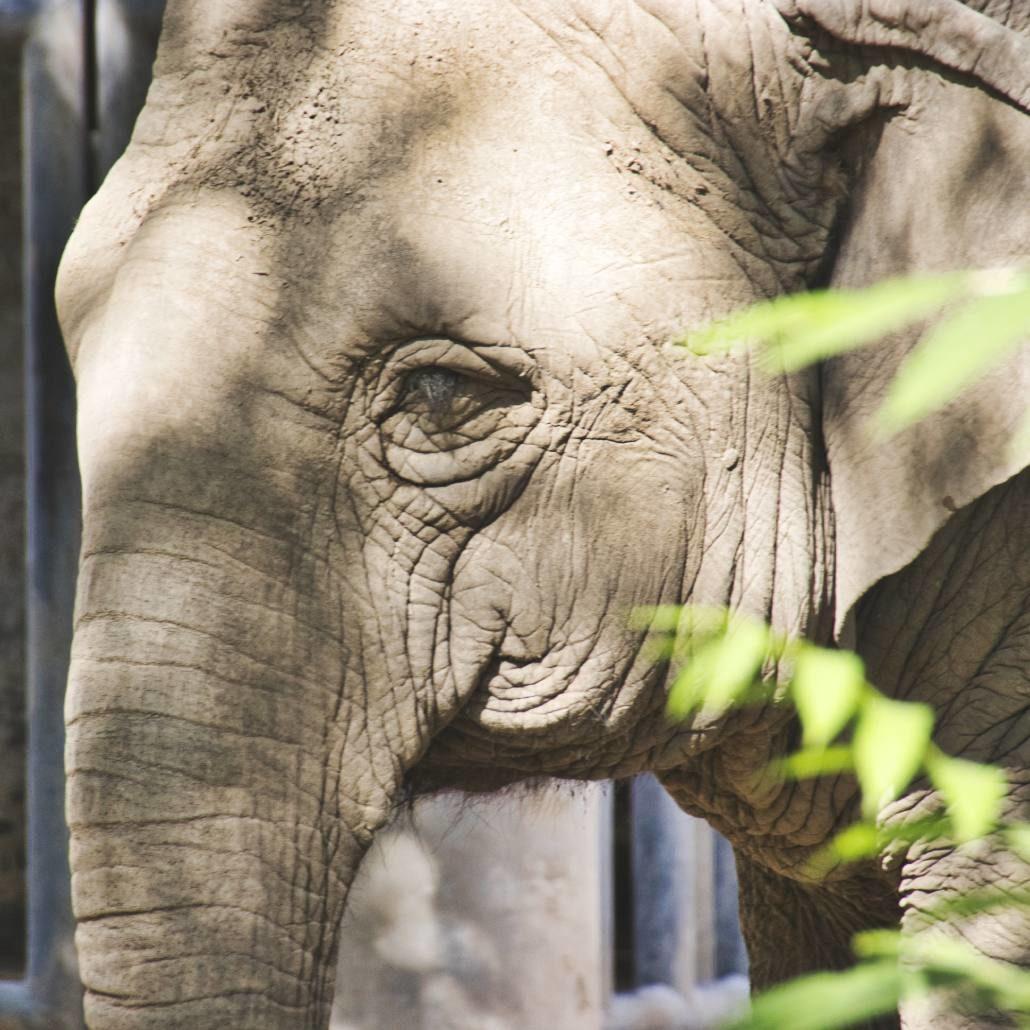 Elefant im Pekinger Zoo