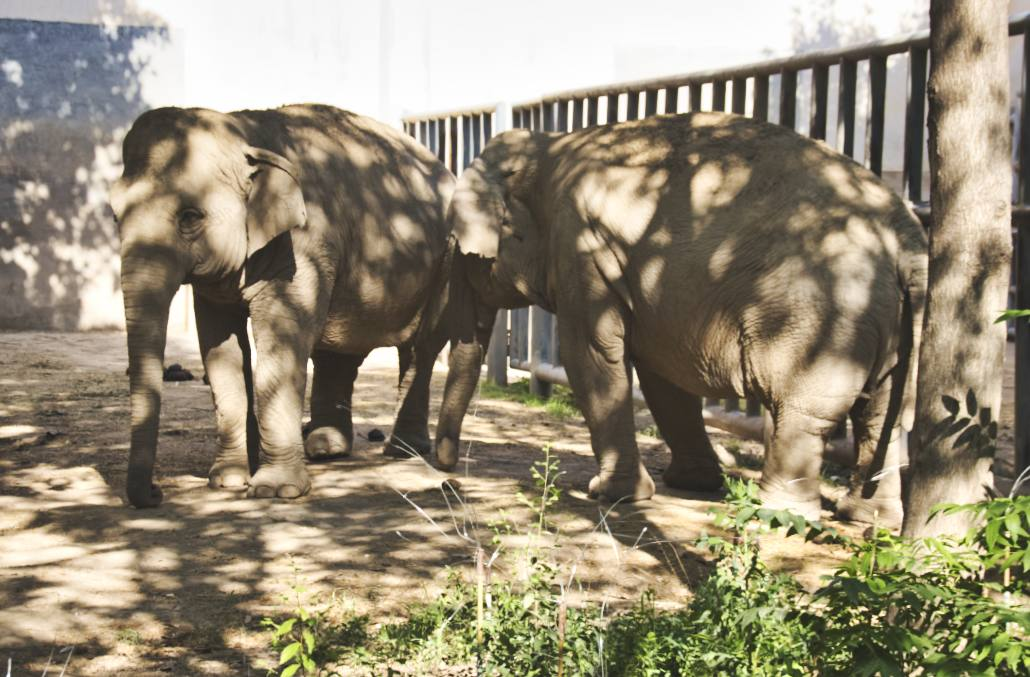 Elefanten in Pekings Zoo